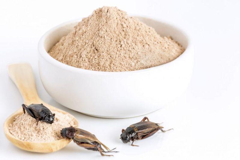 risks Cricket flour