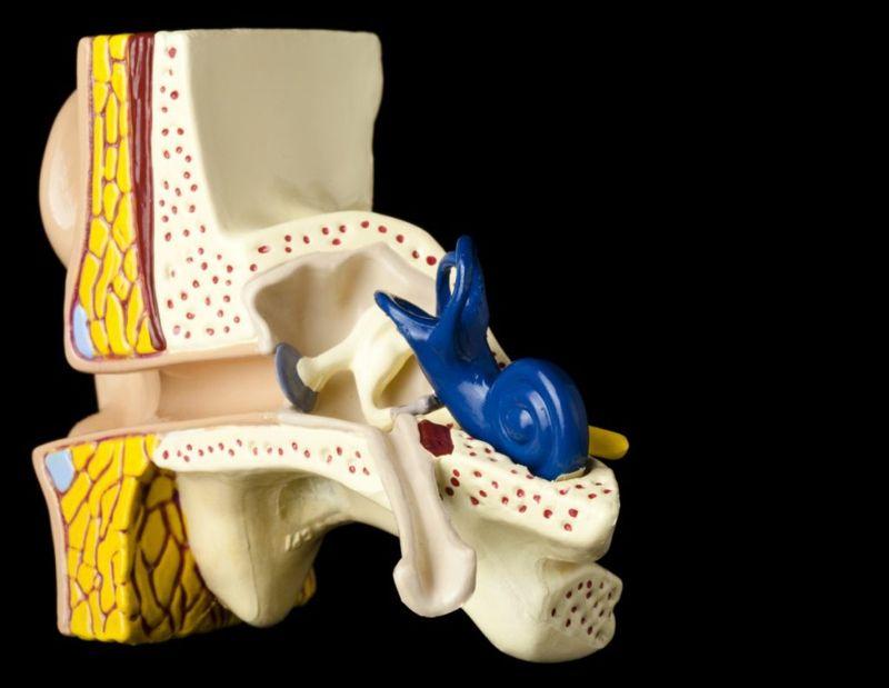 bones of ear