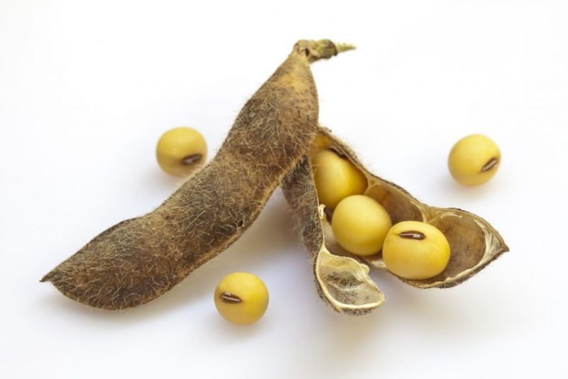 soybeans legumes