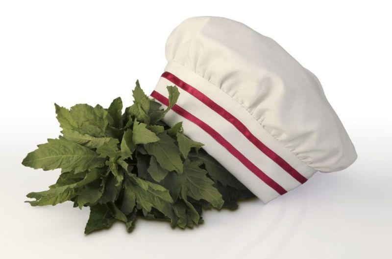 herbs epazote