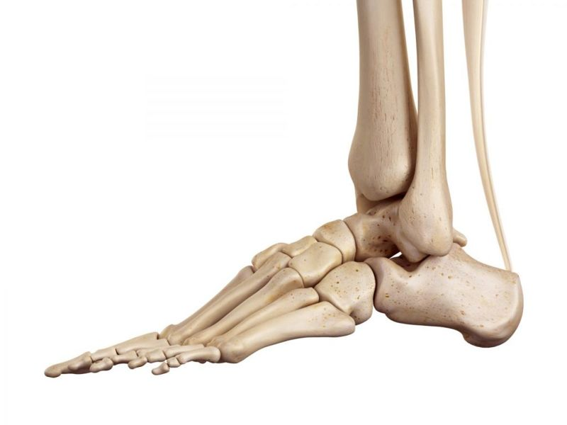 what are the foot bones called