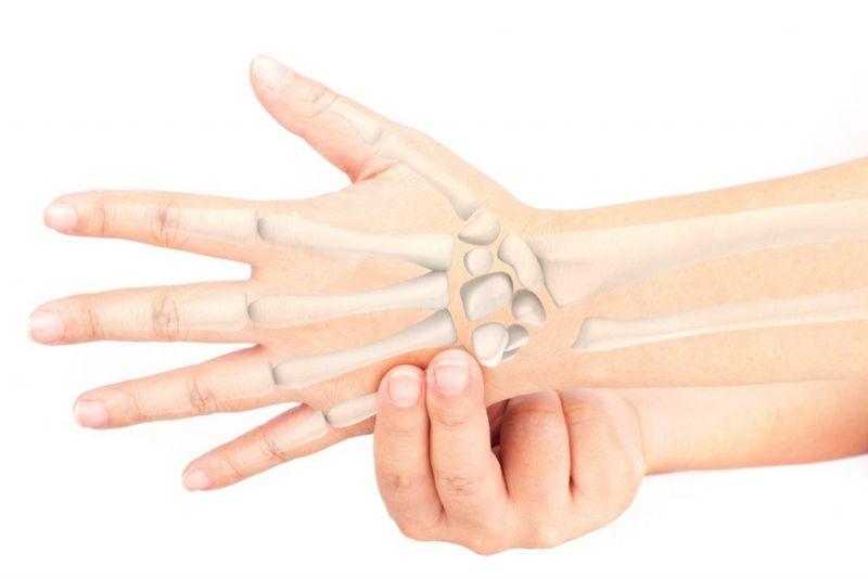 carpals bones human hand