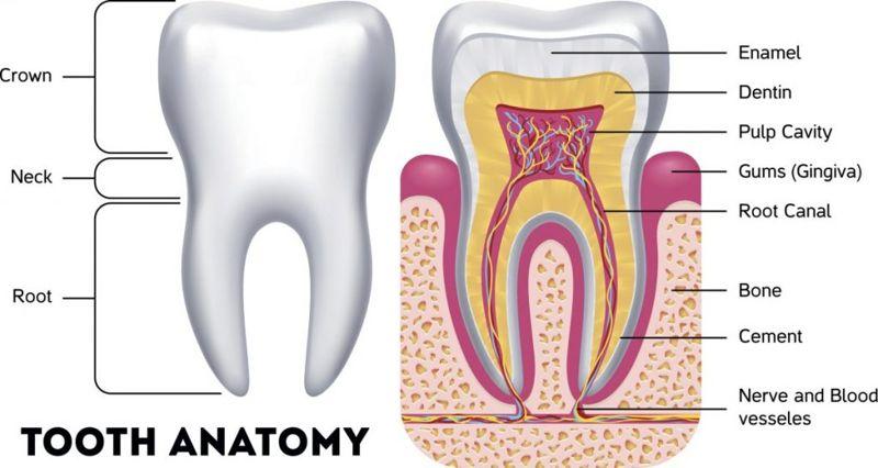 teeth mouth