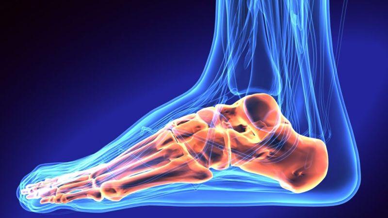 types of bone in feet