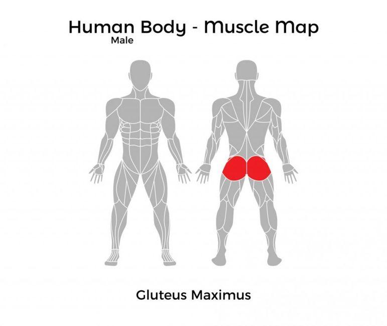 leg muscle maps