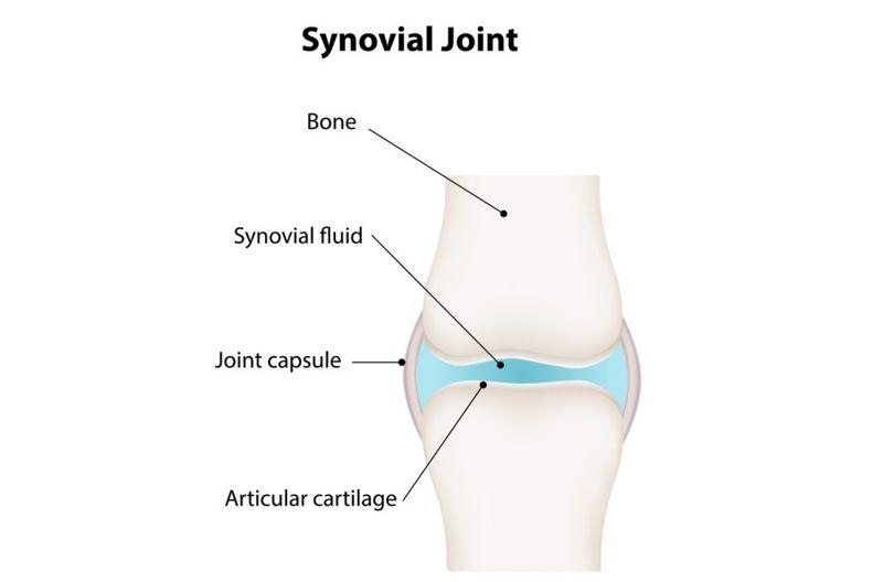 synovial joint fluid