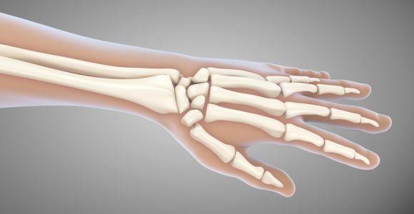 Bones in the Human Hand