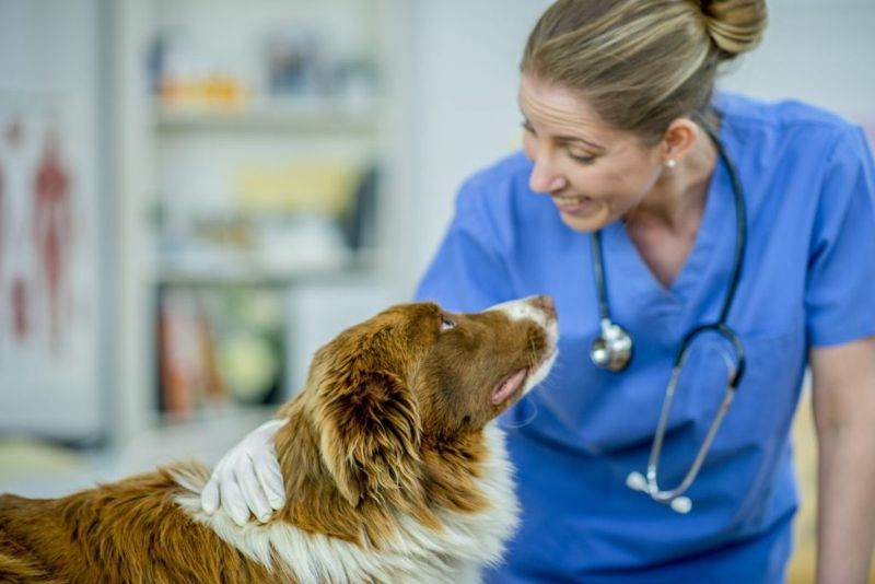 phases dog veterinarian