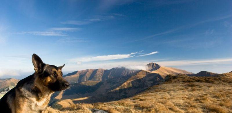 outdoorsy German shepherd