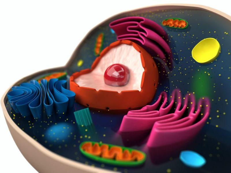 cells Friedreich ataxia