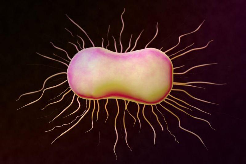 bacterial e. coli