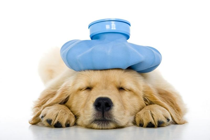 health why do dogs eat poop