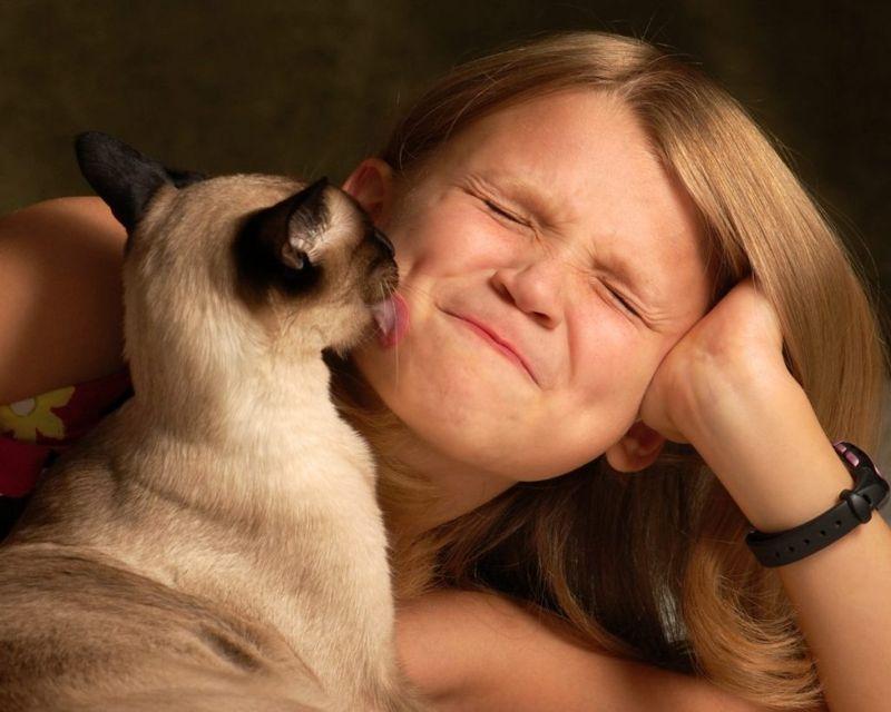 loyal Siamese cats