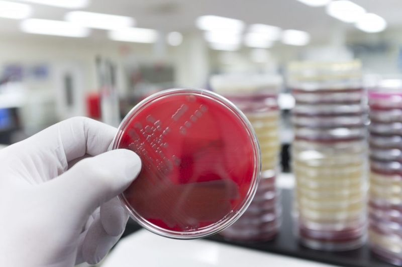 antibiotics Coxiella burnetii