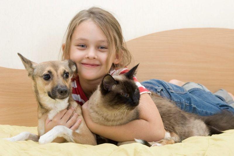 family pets Siamese cats