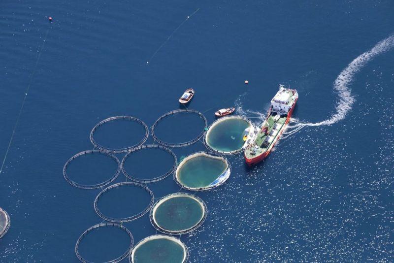 environmental pescatarian diet