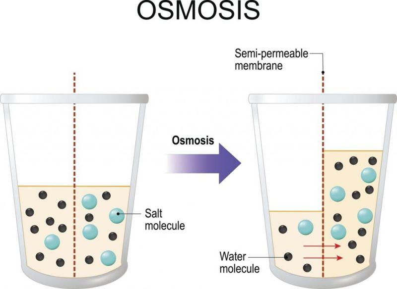 osmosis hypertonic