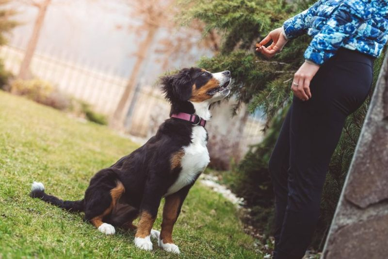training a dog not to eat poop