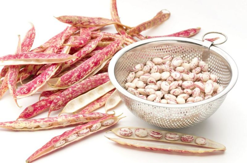 borlotti bean benefits
