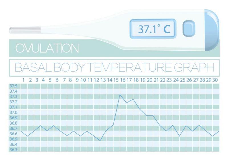 Basal body temperature pregnancy
