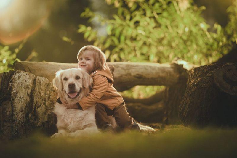 Golden Retrievers and children