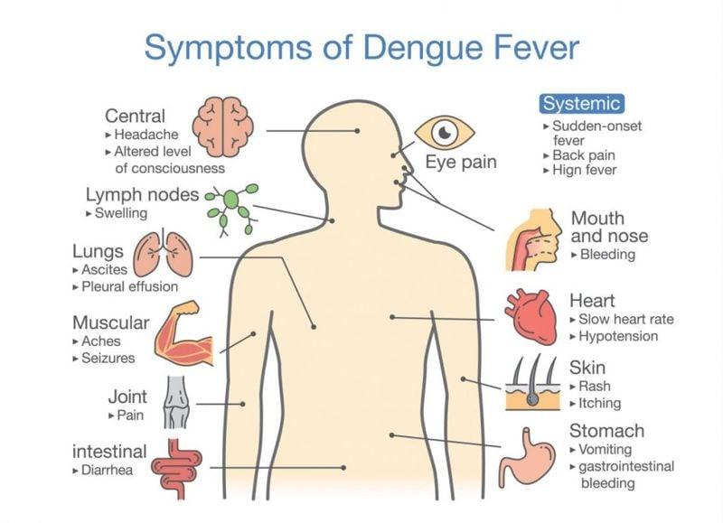 dengue Neglected tropical diseases