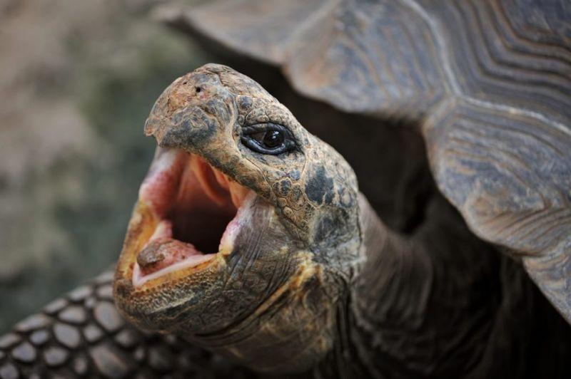 turtle jokes