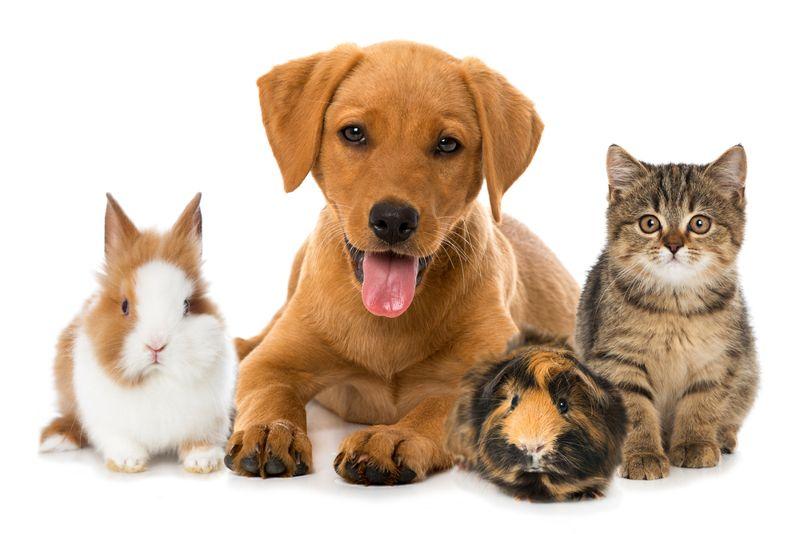 naming pet names