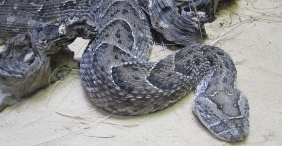 What Are the Most Venomous Snakes in the World?