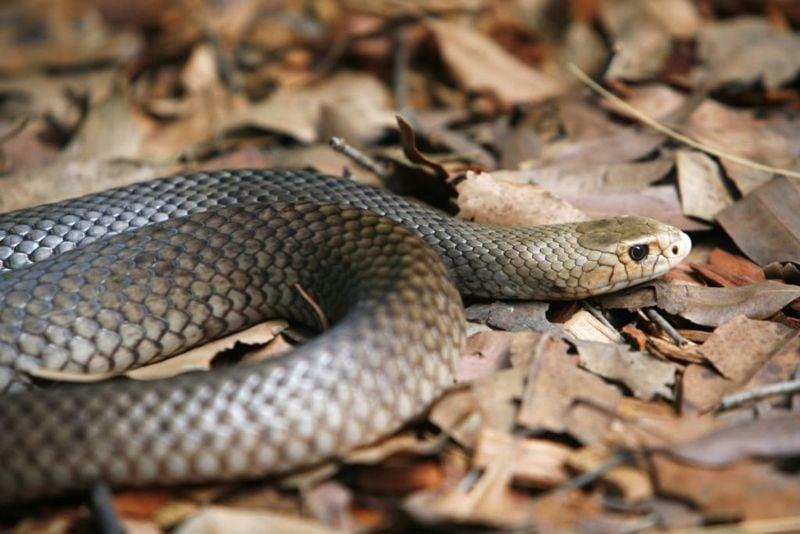 Venomous snakes in the world