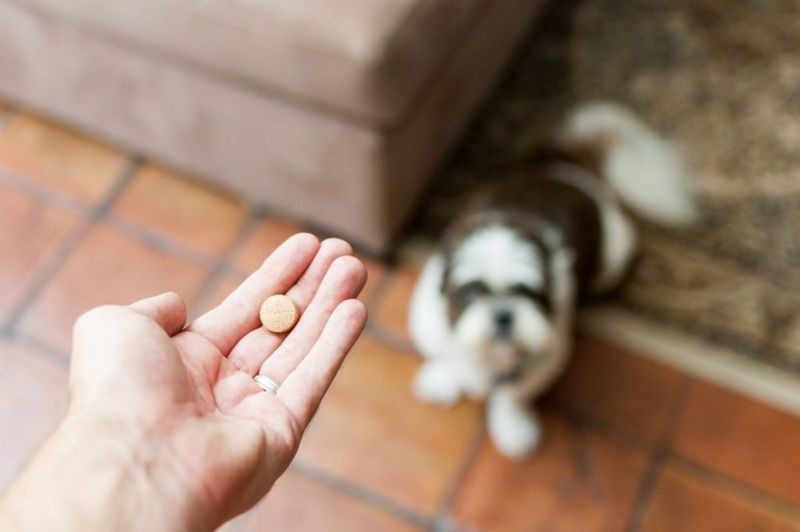 why dogs lick paws