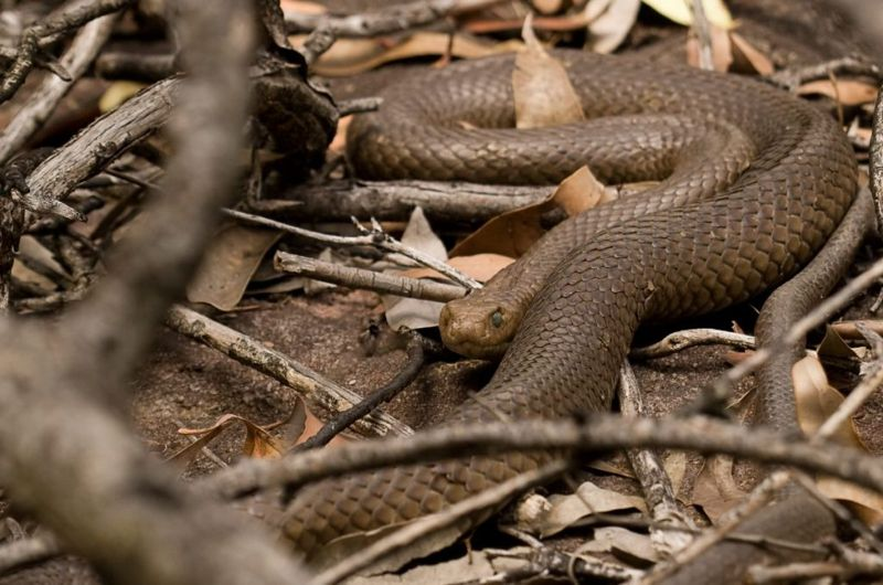 Venomous snakes snakes