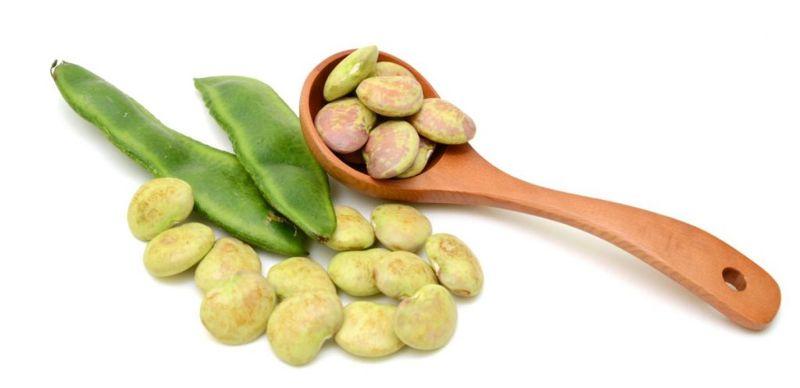 lima beans nutritional profile lima bean