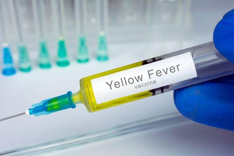 yellow fever haemogogus