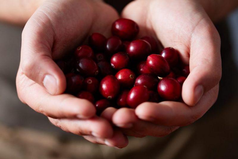 cranberries sources of iodine