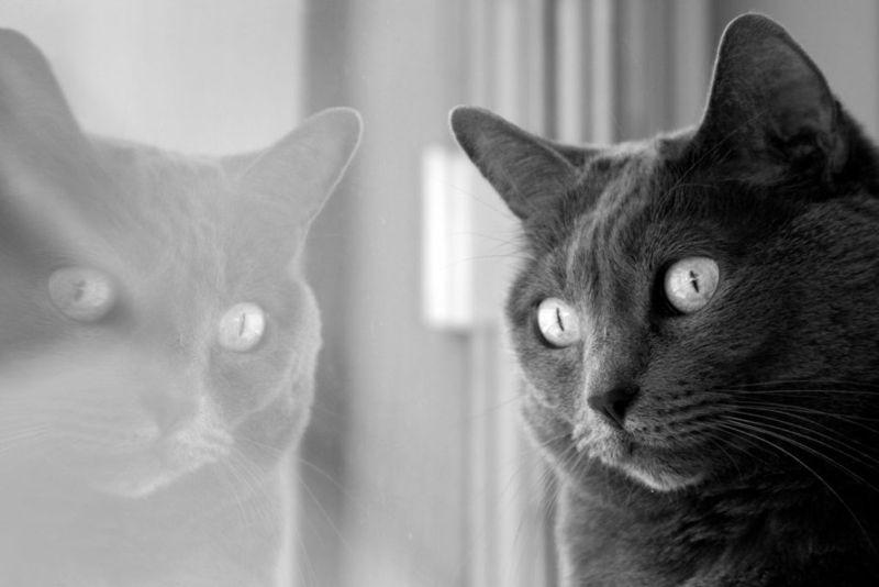 Schrödinger's cat Schrsdinger