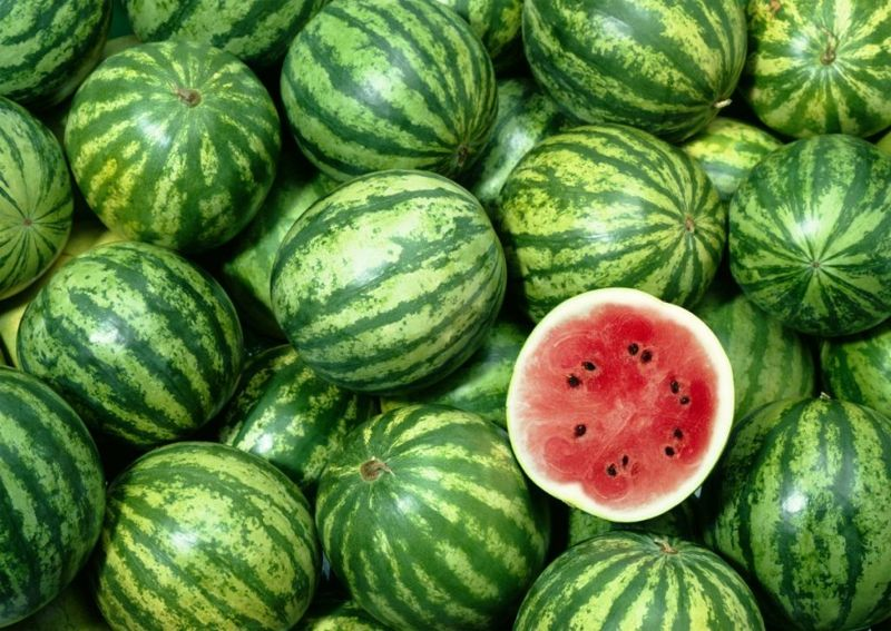 regular oval watermelons