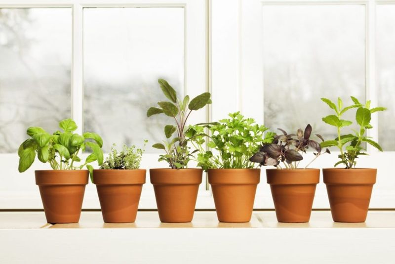 indoor pots soak overnight drainage