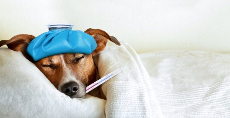 coughing pneumonia dogs