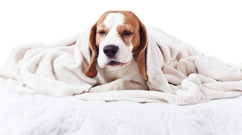 reason dog cough