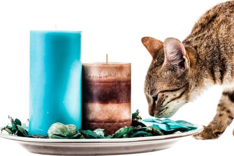 cats sneeze
