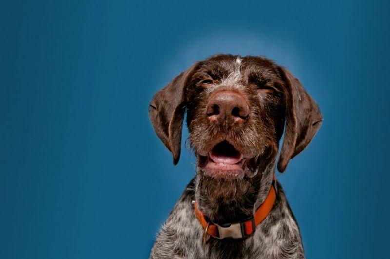Nasal Tumors Trigger Sneezing