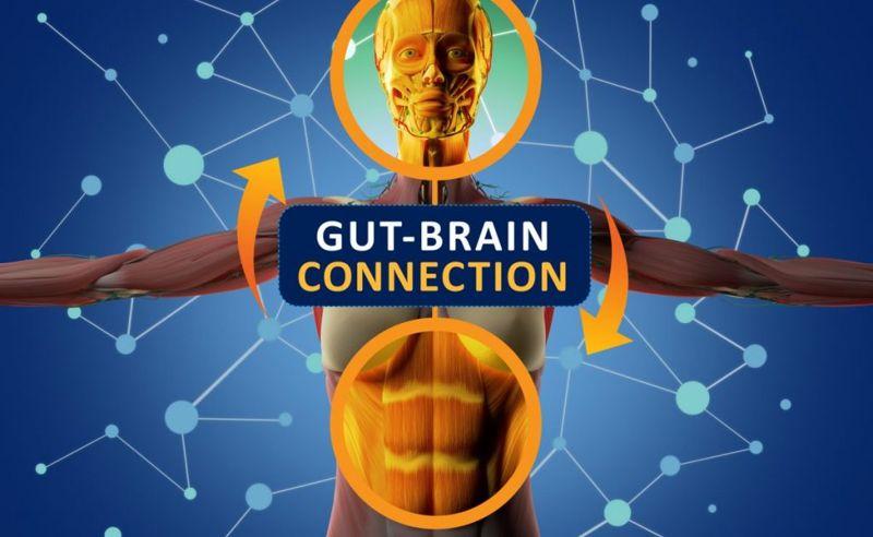 gut-brain axis connection