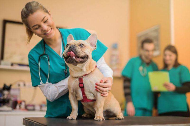 Happy veterinarian with French bulldog
