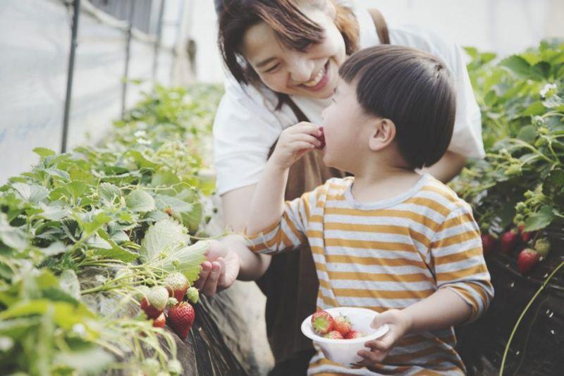 strawberries sources of iodine