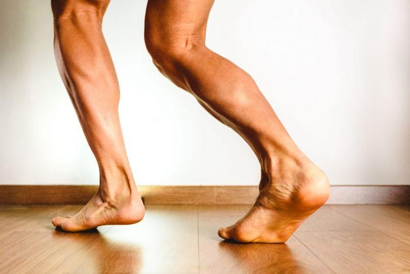 tibia muscles calf