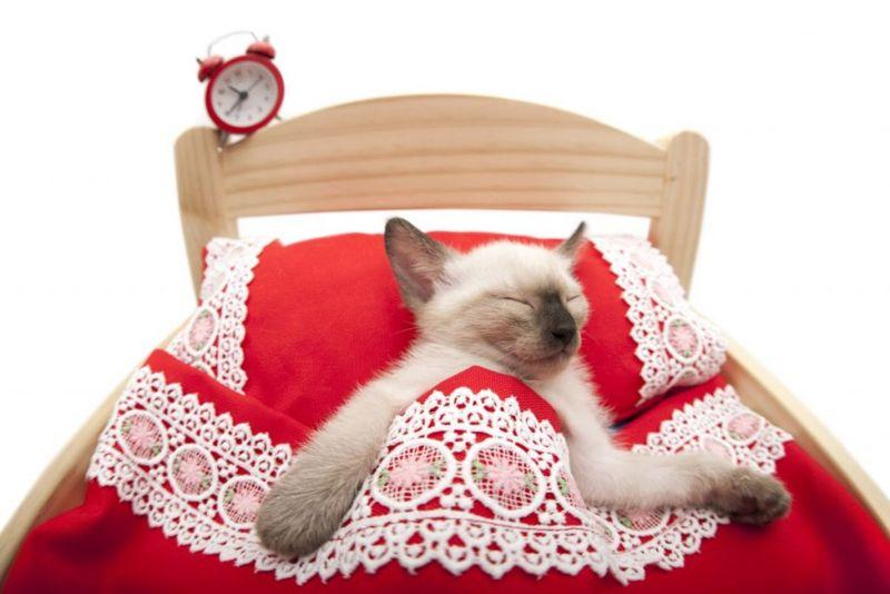 waking sleeping cat feline safe