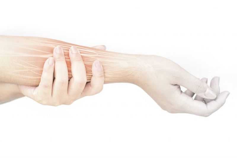 forearm radius muscles
