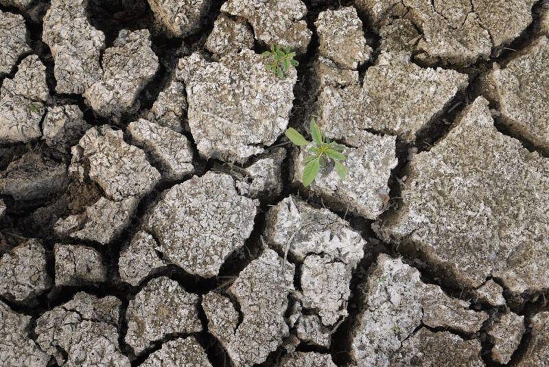 crop failure affects pellagra