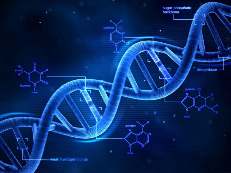 protein, desmoid tumors, beta-catenin, cells